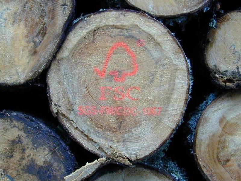 Naturnah: Frankfurter Stadtwald bekommt Siegel - ökoLeo Umwelt- und ...