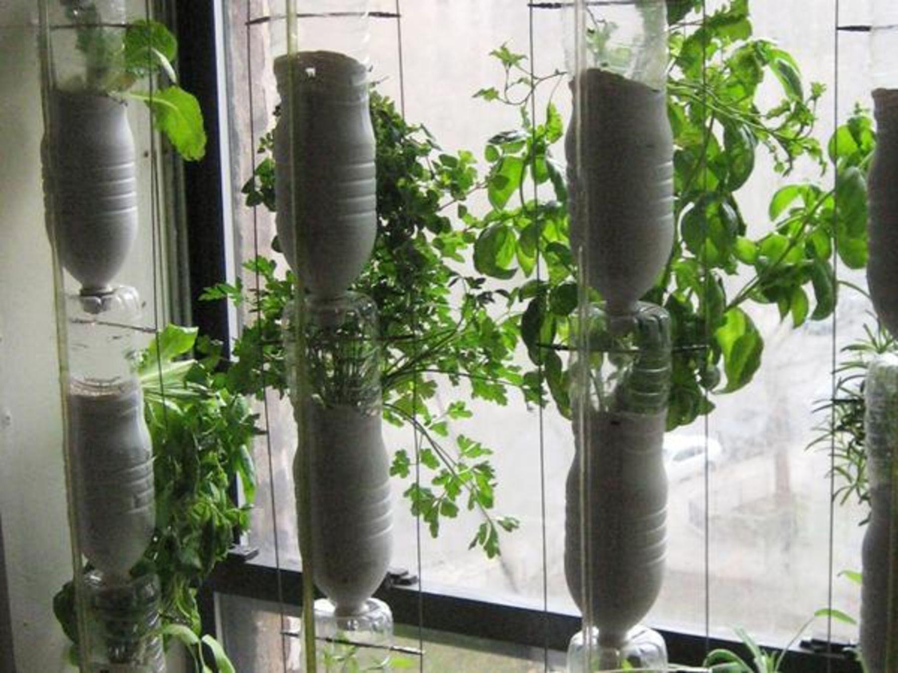 Dein Mini Garten Was In Topfen Kisten Und An Mauern Wachst