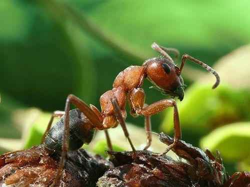 kleine tiere gro e leistung insekten koleo umwelt. Black Bedroom Furniture Sets. Home Design Ideas