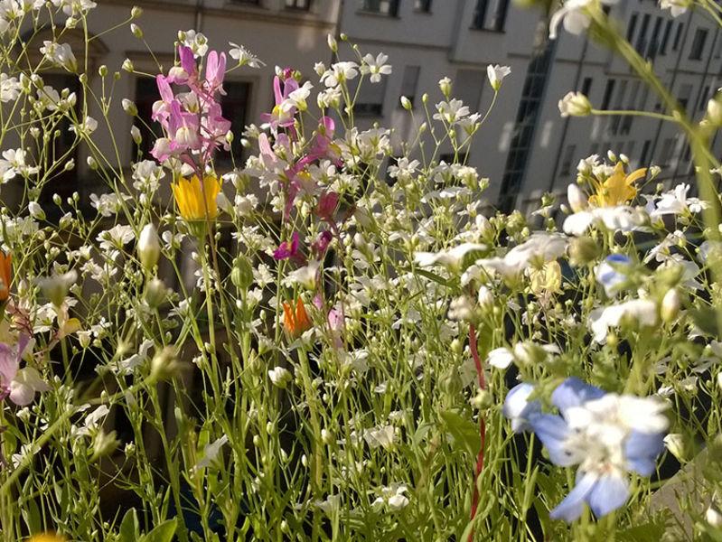 Fotoserie: Bienenfreundliche Pflanzen