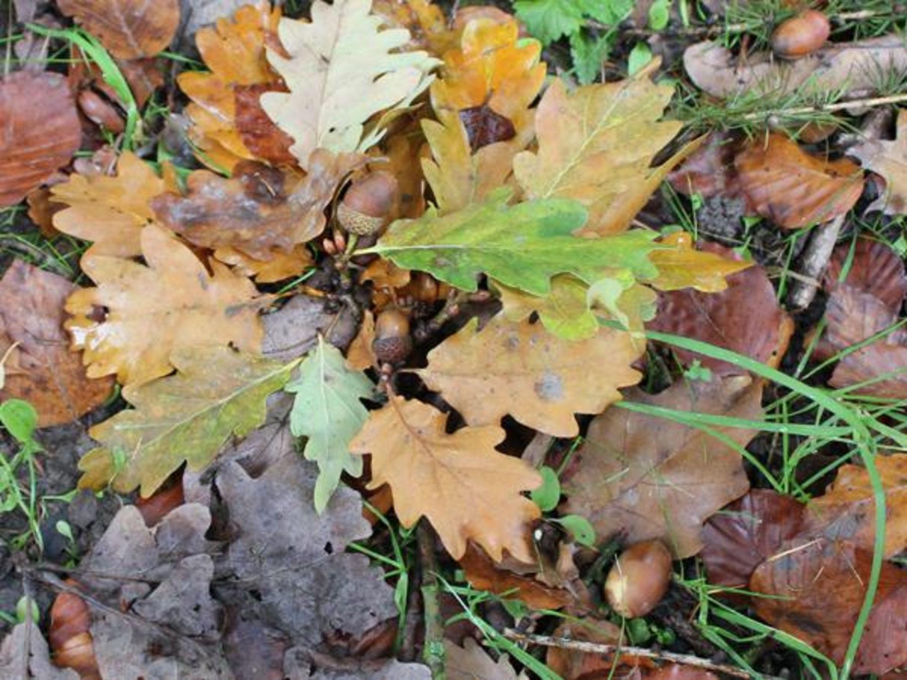Was Tut Sich Im Herbst Im Wald Okoleo Umwelt Und Naturschutz Fur