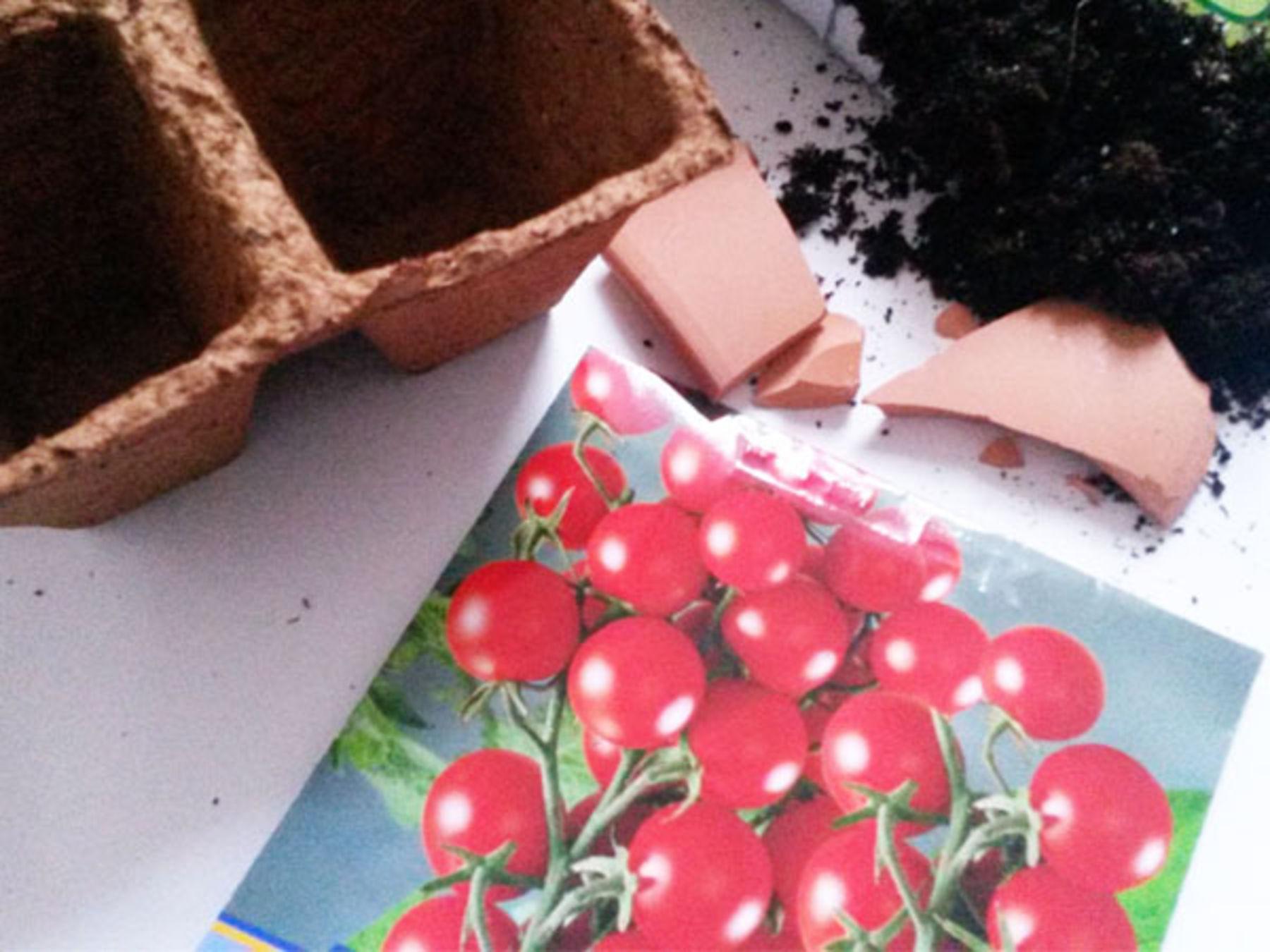 dein garten auf der fensterbank tomaten vorziehen koleo umwelt und naturschutz f r kinder. Black Bedroom Furniture Sets. Home Design Ideas