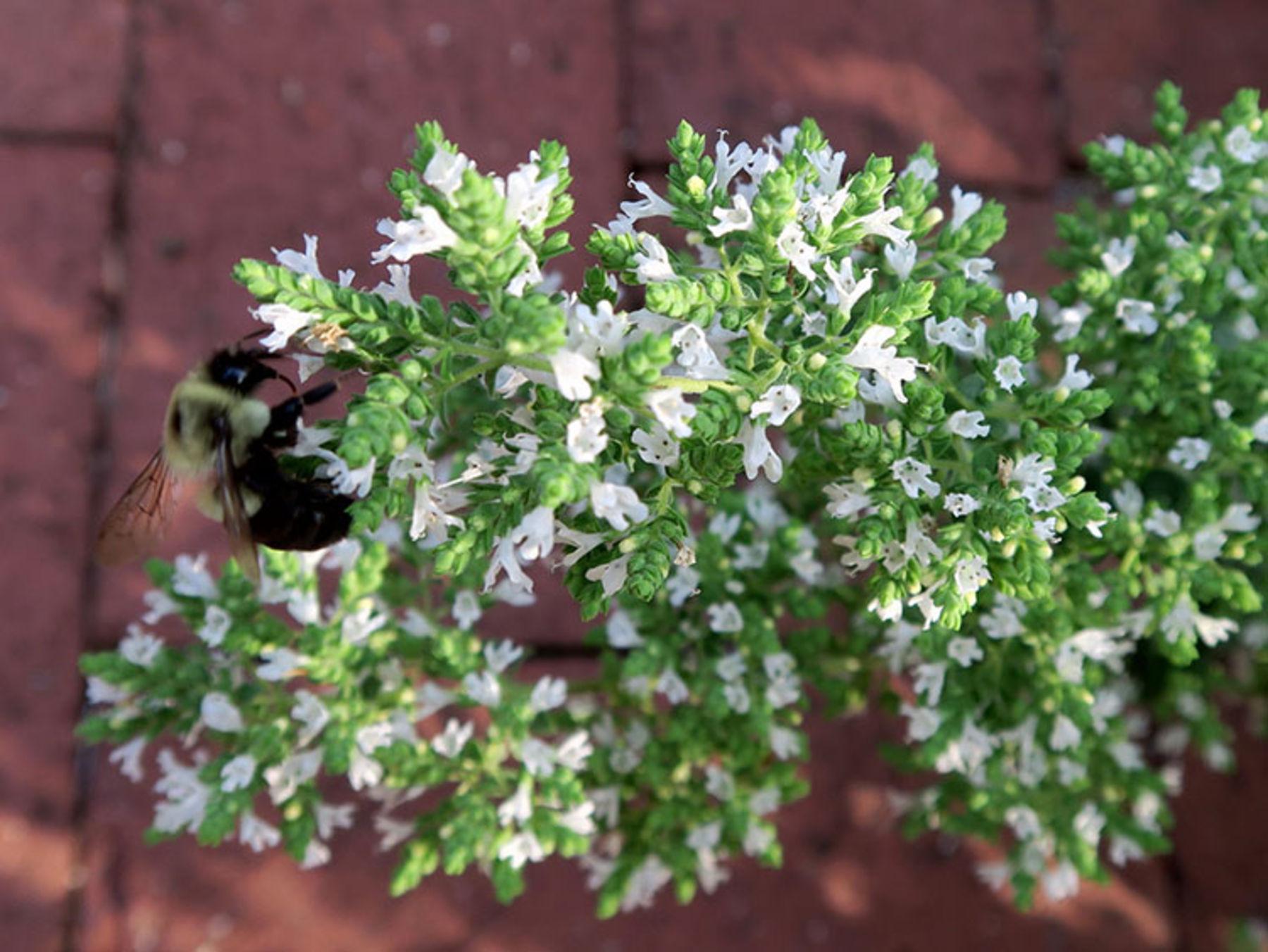 Fotoserie Bienenfreundliche Pflanzen Okoleo Umwelt Und
