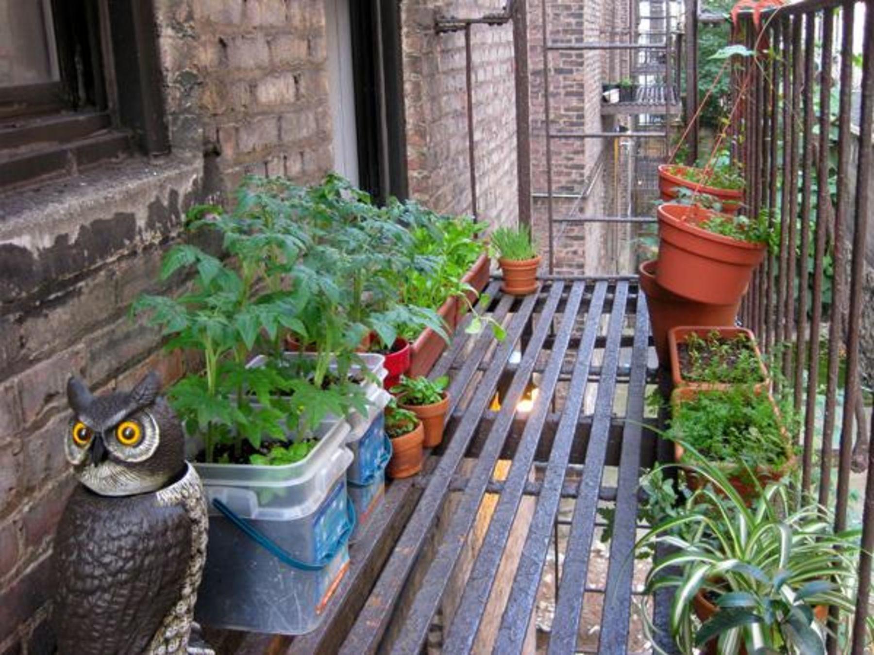 Dein Mini Garten Was In Töpfen Kisten Und An Mauern Wächst