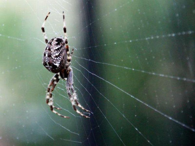 altweibersommer fliegende spinnen  ökoleo umwelt und