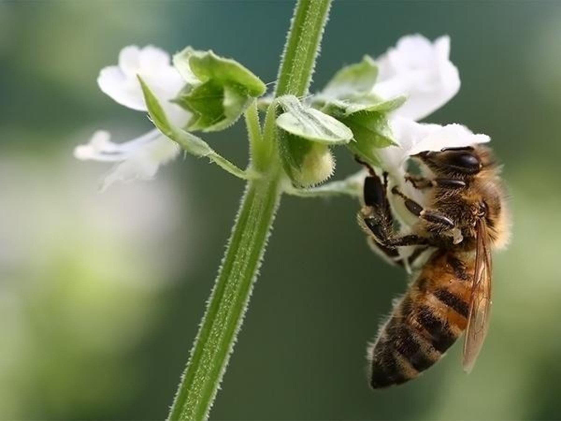 Sind die Bienen in Gefahr? - ökoLeo Umwelt- und Naturschutz für ...