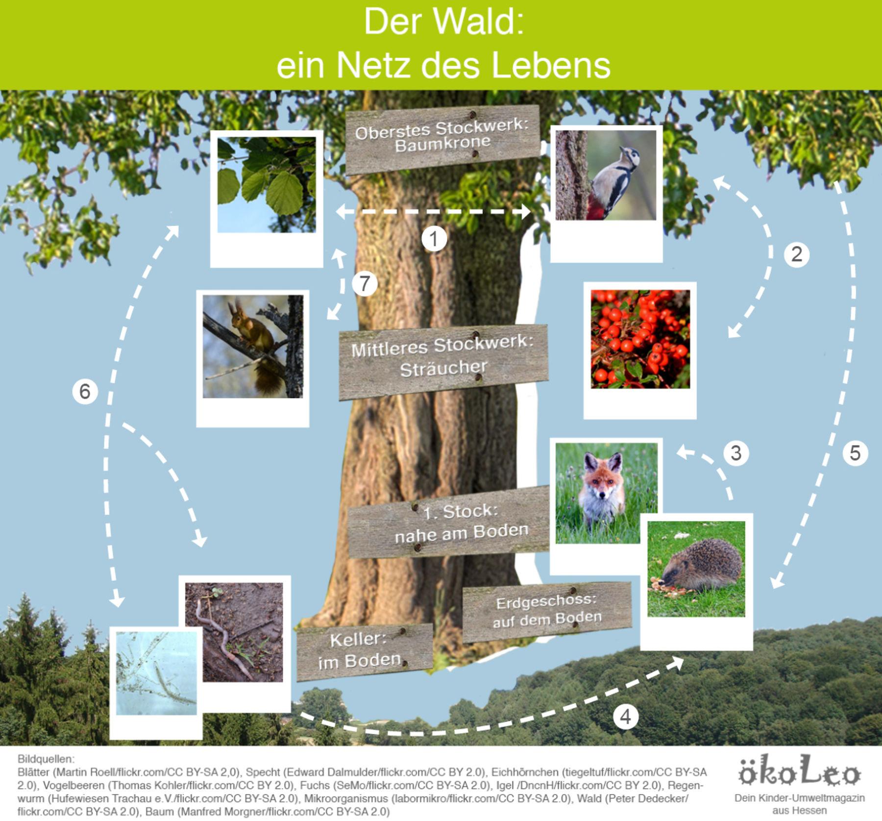 Das Netz Des Lebens Im Wald Okoleo Umwelt Und Naturschutz Fur