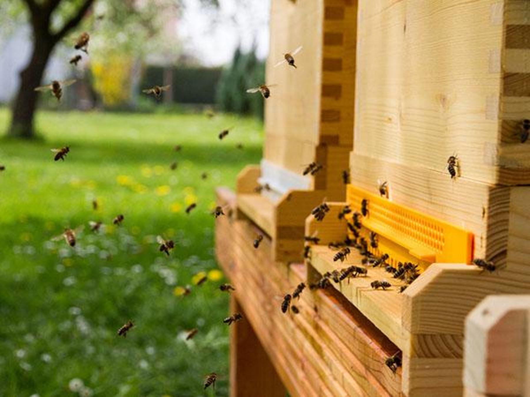 sind die bienen in gefahr koleo umwelt und naturschutz f r kinder in hessen. Black Bedroom Furniture Sets. Home Design Ideas