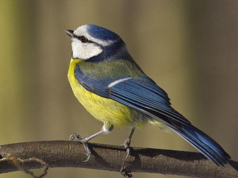 Berühmt Vögel bestimmen: ganz einfach mit einer App - ökoLeo Umwelt- und #XD_18