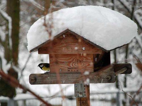 das winterr tsel teil 2 welcher vogel ruft da koleo umwelt und naturschutz f r kinder in. Black Bedroom Furniture Sets. Home Design Ideas