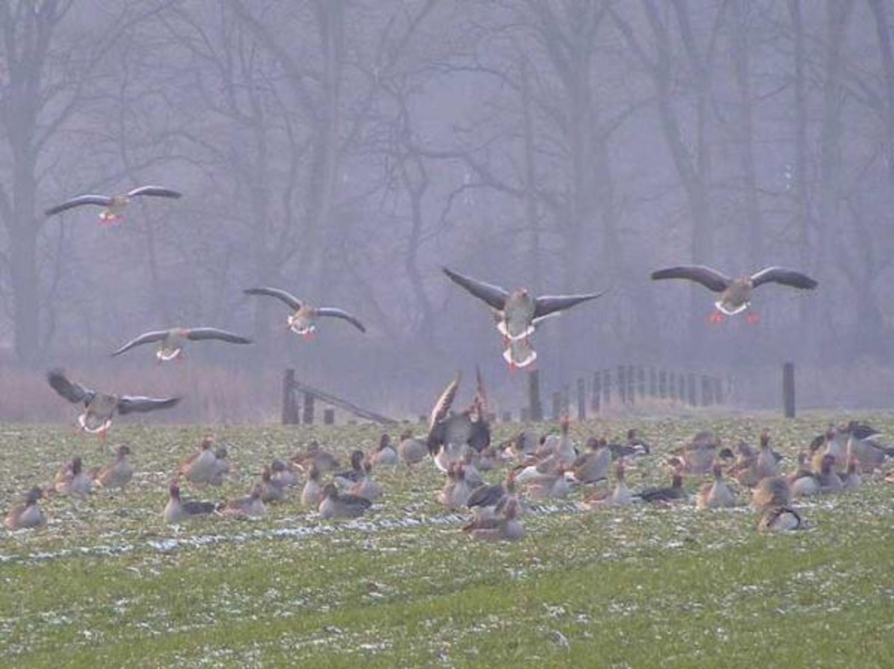 competitive price ab4b1 e6c42 Zugvögel unterwegs: Wer trötet da? - ökoLeo Umwelt- und ...