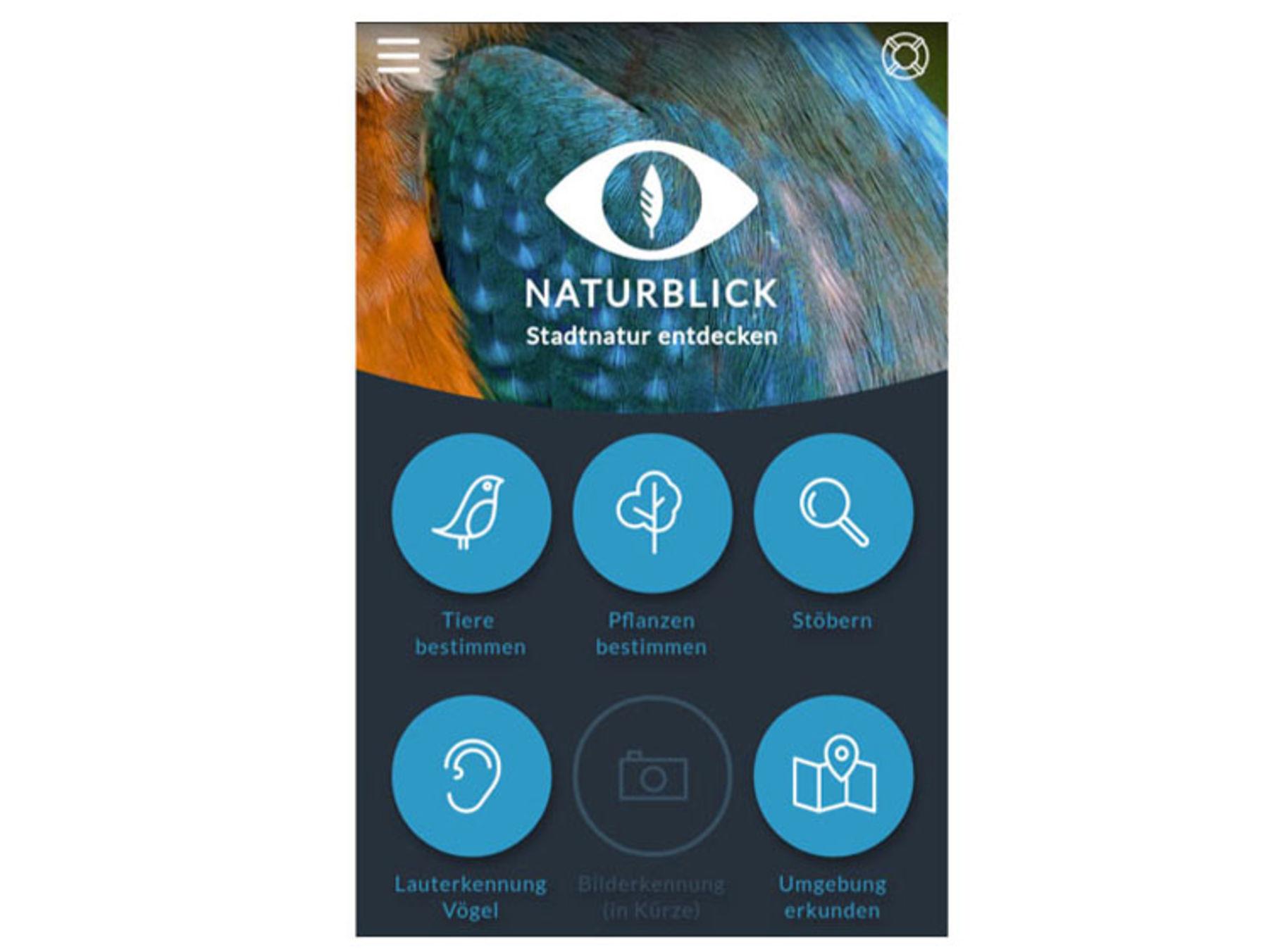 Mit Apps Arten Bestimmen Und Die Natur Entdecken ökoleo Umwelt