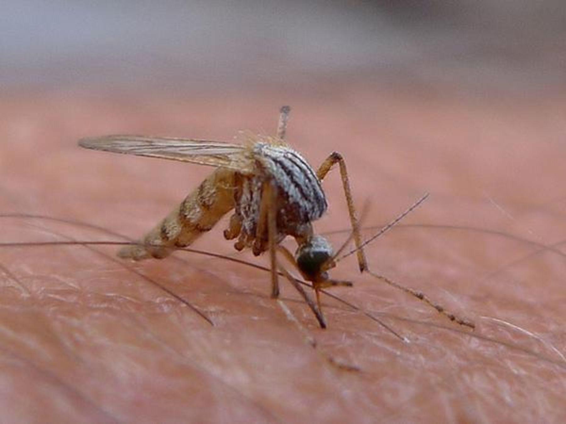 kleine tiere große leistung insekten  ökoleo umwelt